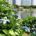 四季風景・花草動植物