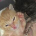 我家可愛的小貓