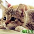 Cute Cate