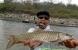 卑南溪手臂大的魚現蹤