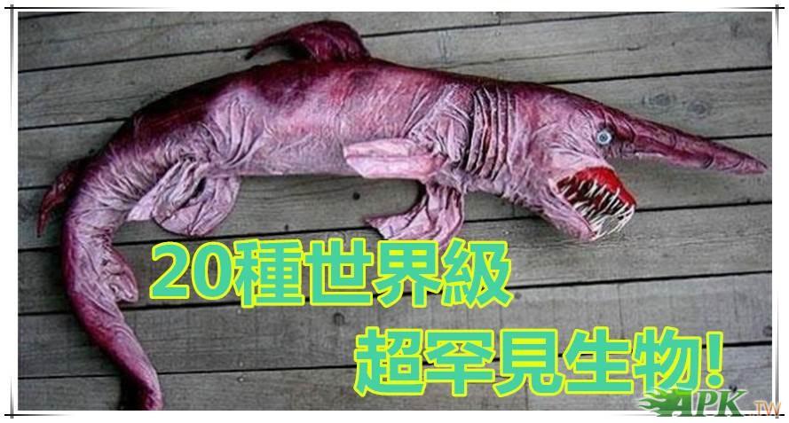 20种地球上最奇怪动物 阴茎蛇> 切蛋鱼>是什麼怪物?