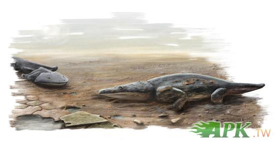 葡萄牙發現2億年前新種恐龍似巨型蠑螈
