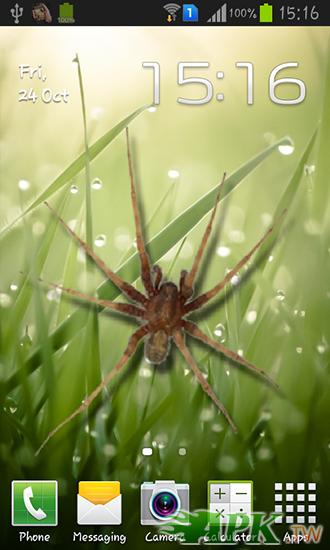 1_spider_in_phone.jpg