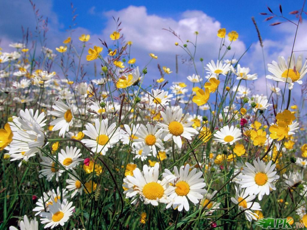 我的快乐就是想你~可爱动物跟漂亮的花集合