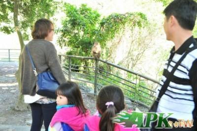 天祥看獼猴卻被猴追  國家公園警告:亂餵野生動物罰3000...