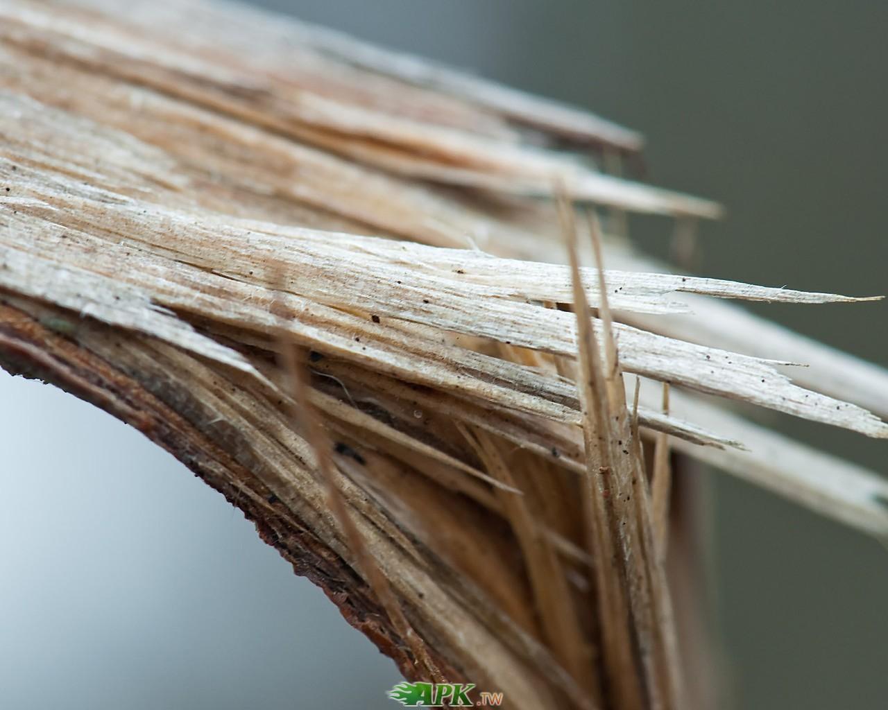 折斷的樹枝.jpg