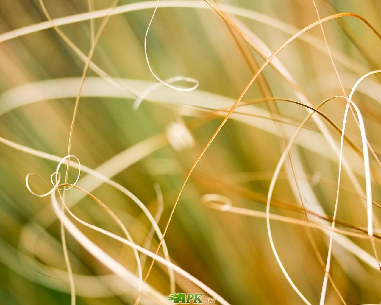 變黃的草.jpg