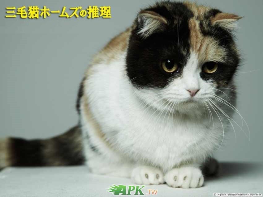 三毛貓福爾摩斯.jpg.jpg