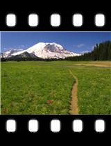 Scenic Trail Mount Rainier National Park Washington.jpg