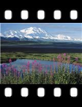 Mount McKinley Denali National Park Alaska.jpg