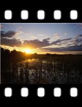 Loxahatchee National Wildlife Refuge Florida.jpg
