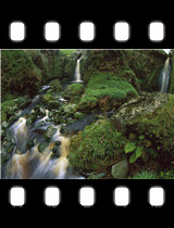 Cascading Waterfalls Among Ferns and Mosses Gough Island.jpg