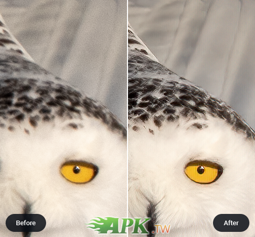owl-before-after.png