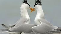 大自然鳥類桌布
