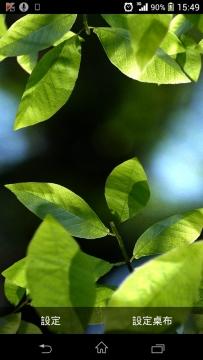 Maxelus系列動態桌布Fresh Leaves v1.8已付费版