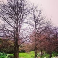 新主題:trees