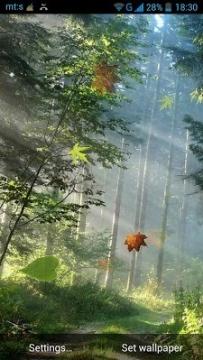 美麗森林動態桌布(2.3↑@3.3MB)