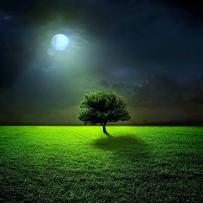 月與夜的風景桌布
